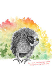 Grey African Parrot Watercolor, September 2016