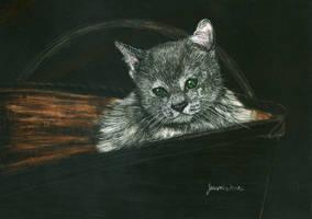 Kitten Basket by Farawaywithin