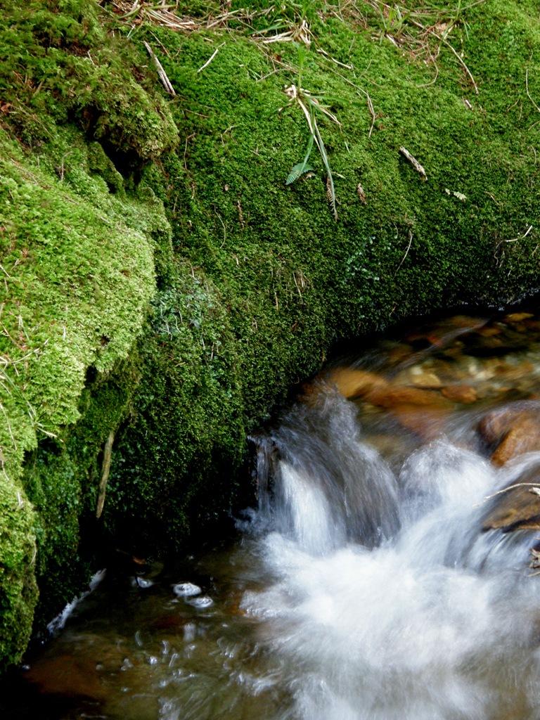 Glenmalure Stream by forever-green