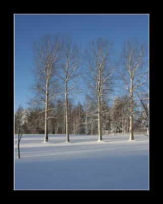 Winter trees by zironjones