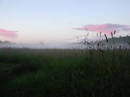 Late evening magic by zironjones
