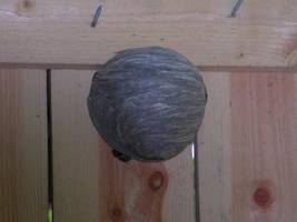 Wasps nest on door by zironjones