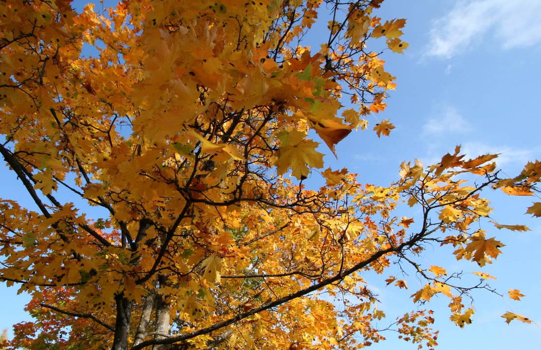 Autumn by zironjones