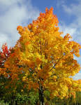 The brighter side of autumn
