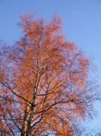Autumn-colored