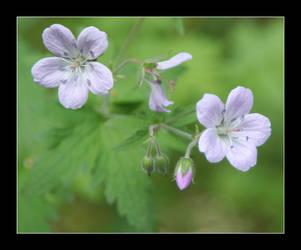 Wild flower by zironjones