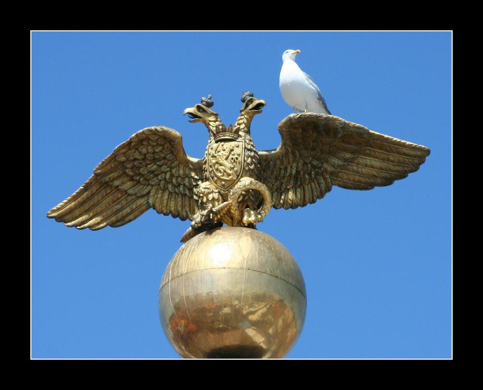 Eagles by zironjones