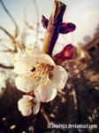 flower56