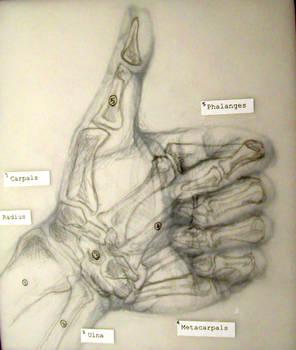 Hand Study III + overlay