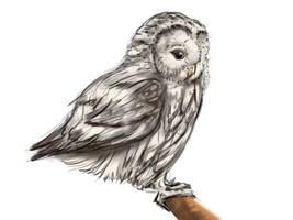 Owl Love by STRAYsketches