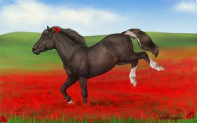 Poppy Pony by konikfryzyjski