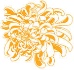 Big Chrysanthemum