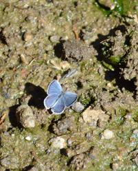 Tiny Blue Friend