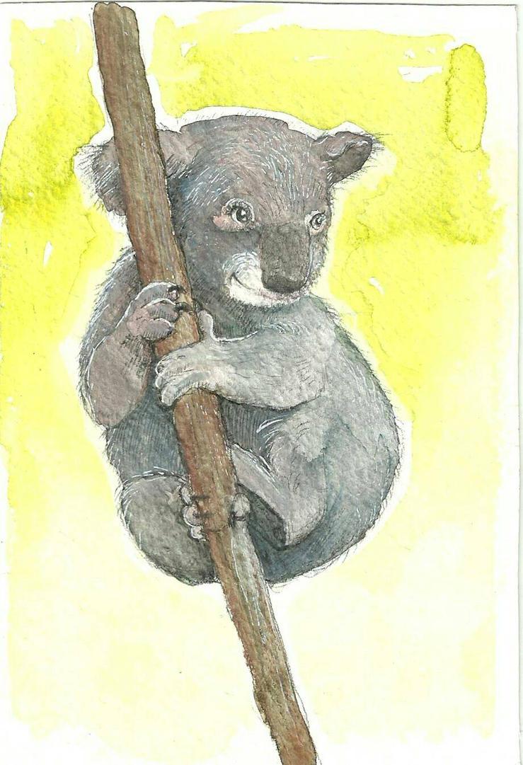 koala illustration by beth223