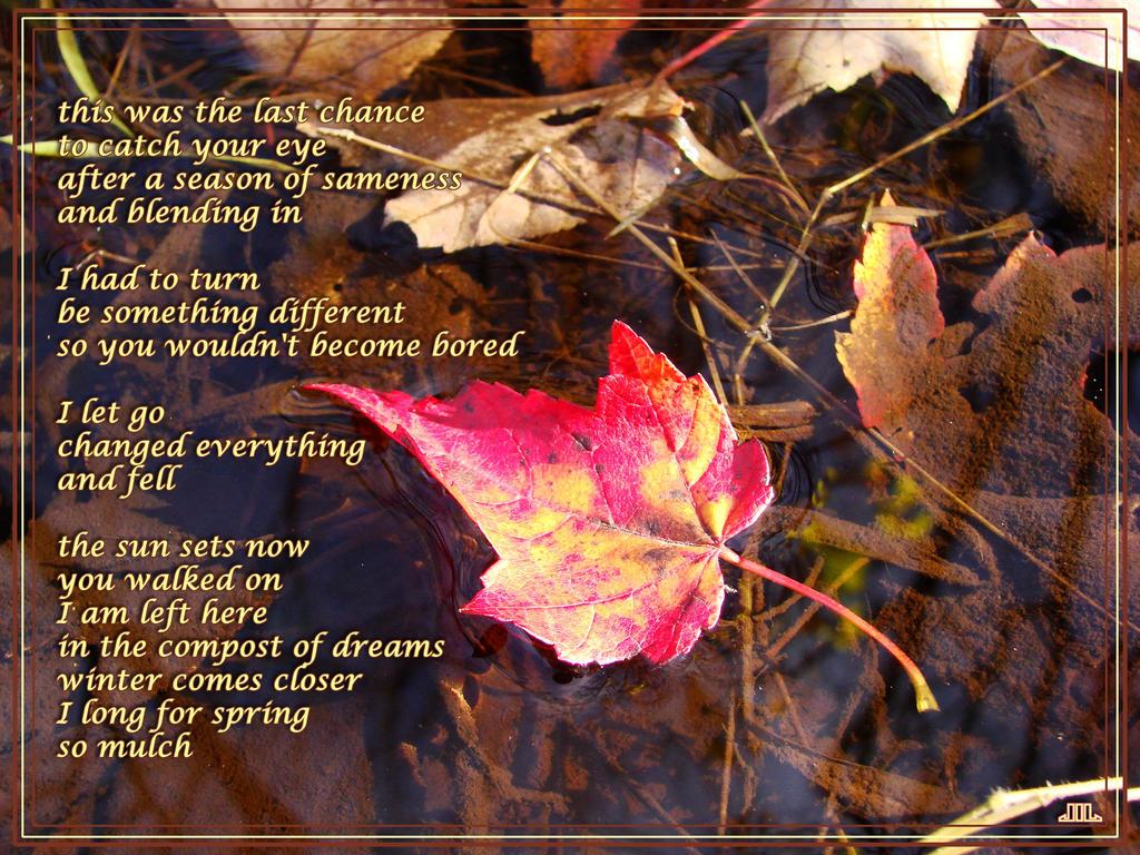 Leaf Story by TriciaStucenski