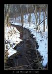Brook through the Snow