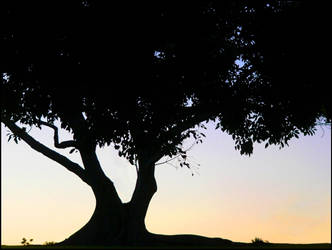 Sillhouette of the Tree by capsicum