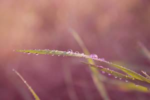 Purple drop :-) by pashia