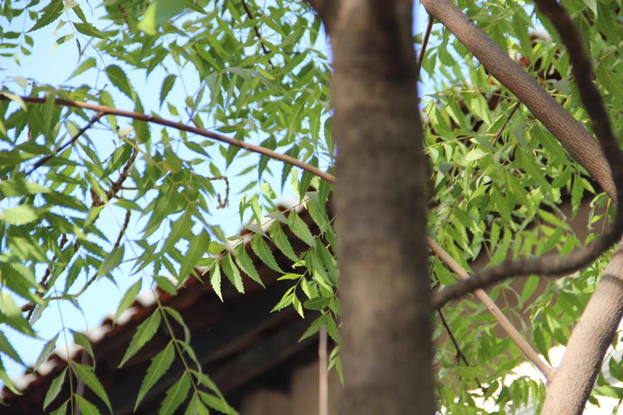 pohon jambu by nadirotul on deviantart