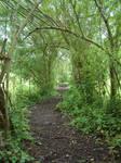 Tree Tunnel 5