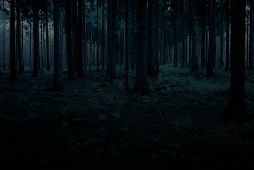 Forest Stock 2