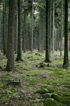 Forest Stock 7