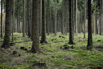 Forest Stock 8
