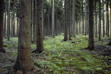 Forest Stock 10 by Sed-rah-Stock