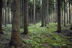 Forest Stock 10