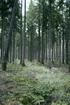 Forest Stock 11