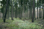 Forest Stock 12