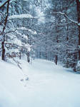 Snow Forest Stock 1