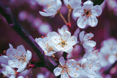 Flower 6 by Sed-rah-Stock