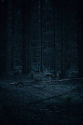 Forest Stock 27 by Sed-rah-Stock