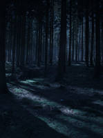Forest Stock 30 by Sed-rah-Stock