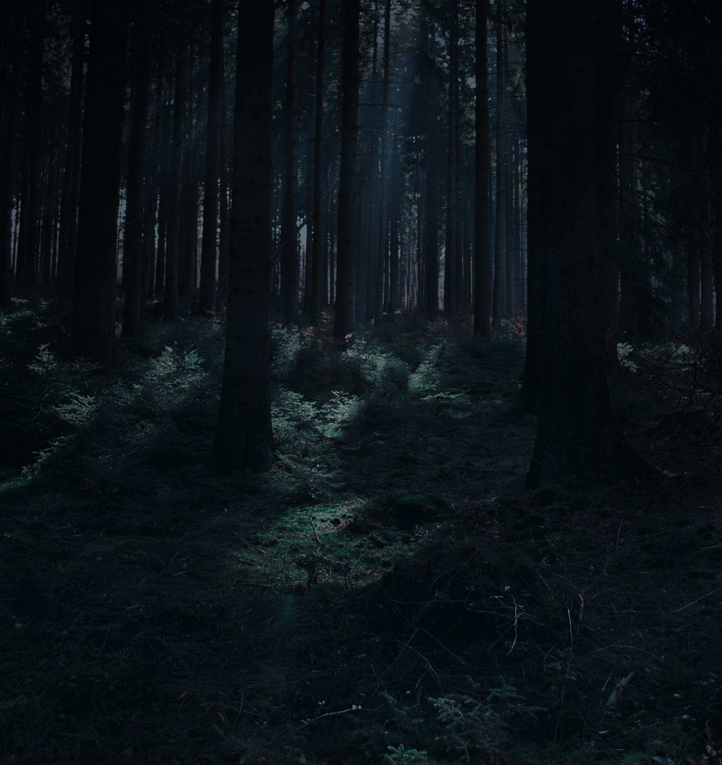 Forest Stock 31 by Sed-rah-Stock