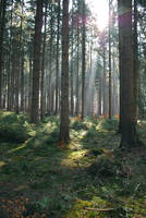 Forest Stock 32 by Sed-rah-Stock