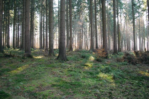 Forest Stock 36