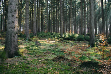 Forest Stock 37 by Sed-rah-Stock