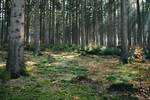 Forest Stock 37