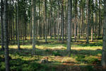 Forest Stock 43
