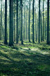 Forest Stock 44 by Sed-rah-Stock