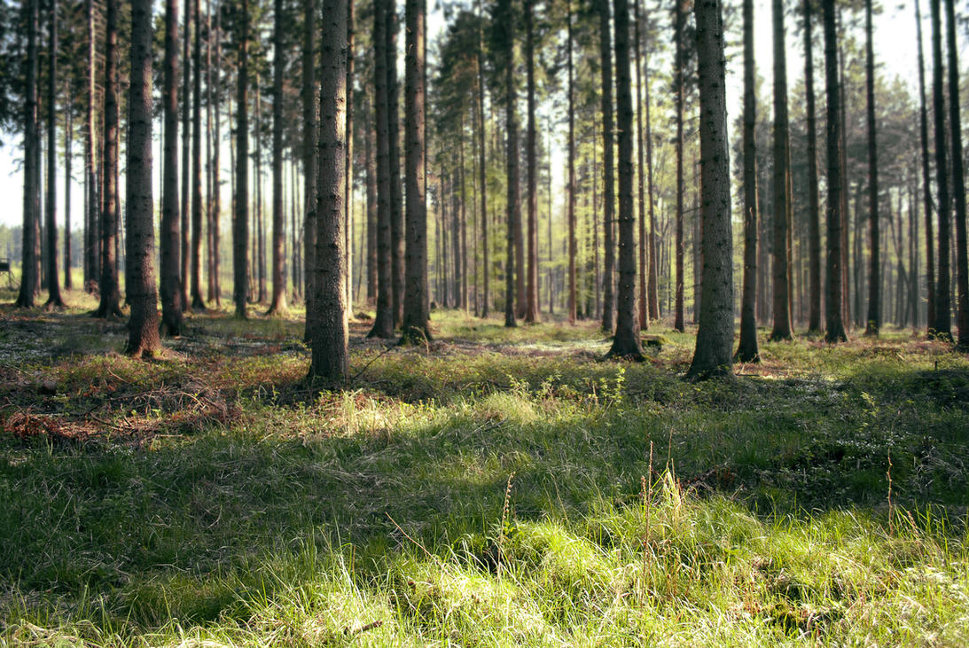 Forest Stock 46 by Sed-rah-Stock