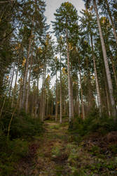 Forest Stock 53 by Sed-rah-Stock