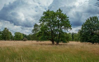 Field 56