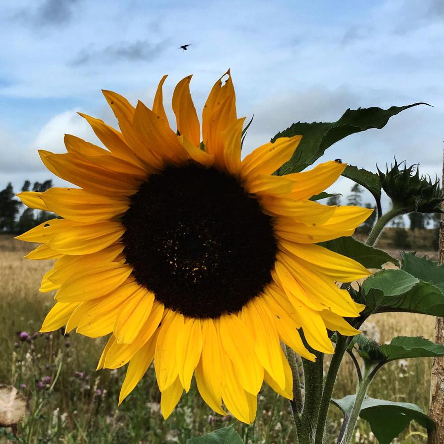 Imitation Of The Sun by JohnlockedDancer