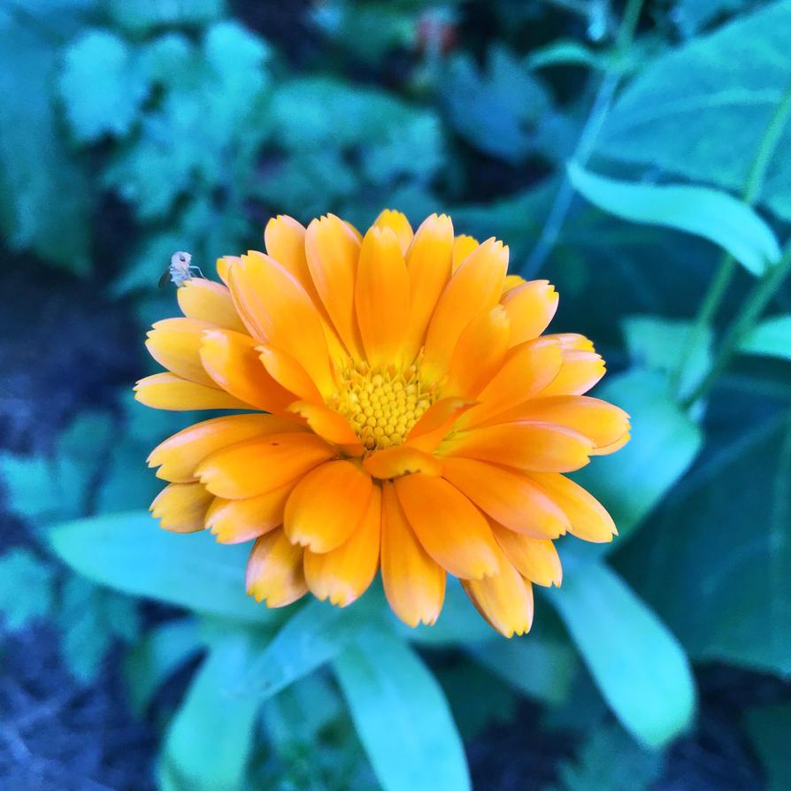 Orange And Blue by JohnlockedDancer