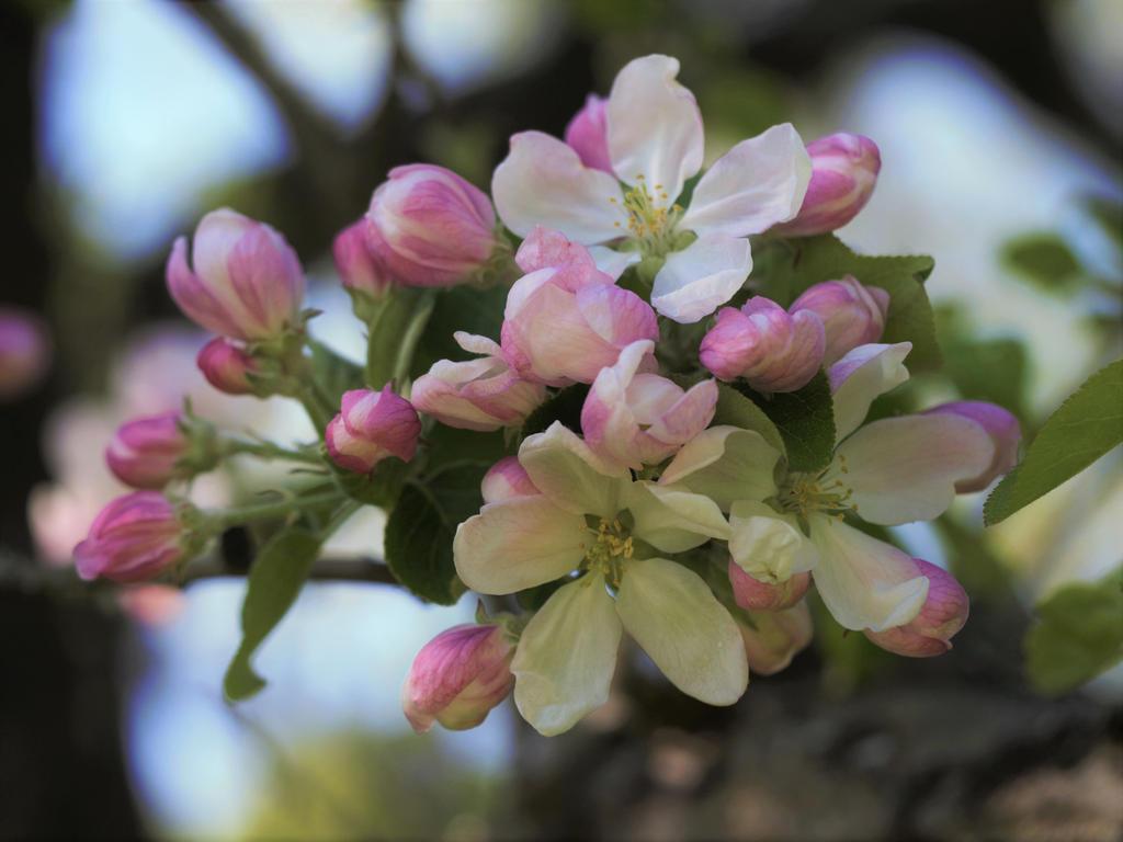 Natural Boquet