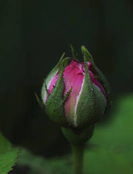 Budding Beauty