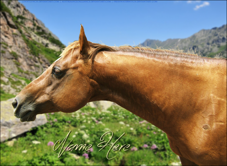 Sorrel QH by freshwaterwitch